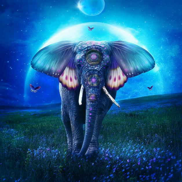 elephant-jessica-allain